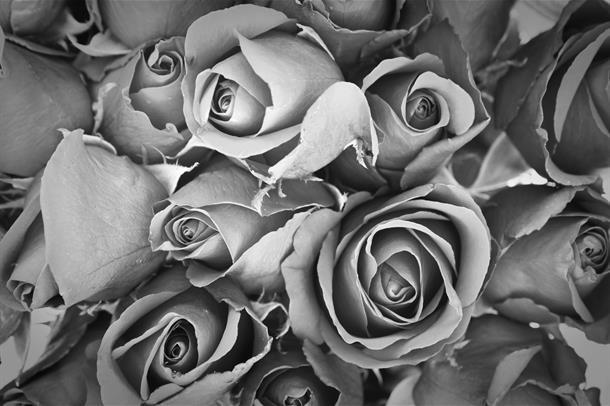 Roser i svart-hvitt.